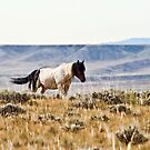 Wild Mustang of Wyoming by Angela E.L. Clements