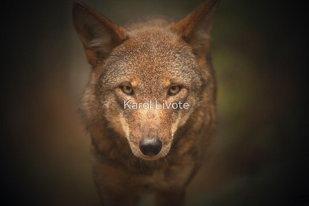 Wolf Stare by Karol Livote