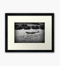 sun baking  Framed Print