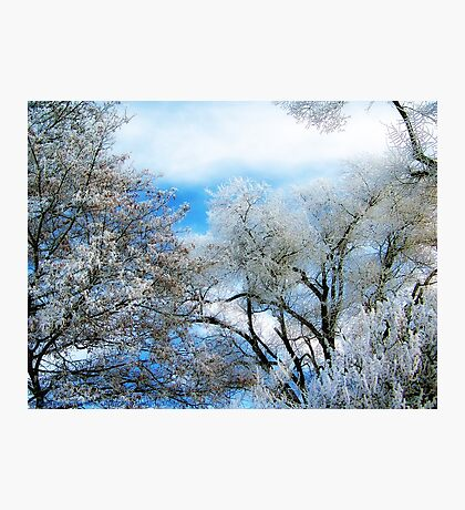 Frozen Trees 2 Photographic Print