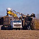 Harvesting the Cane by Kim Austin