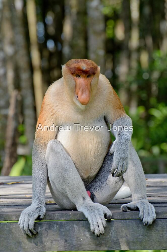 Quot Male Proboscis Monkey Nasalis Larvatus Quot By Andrew