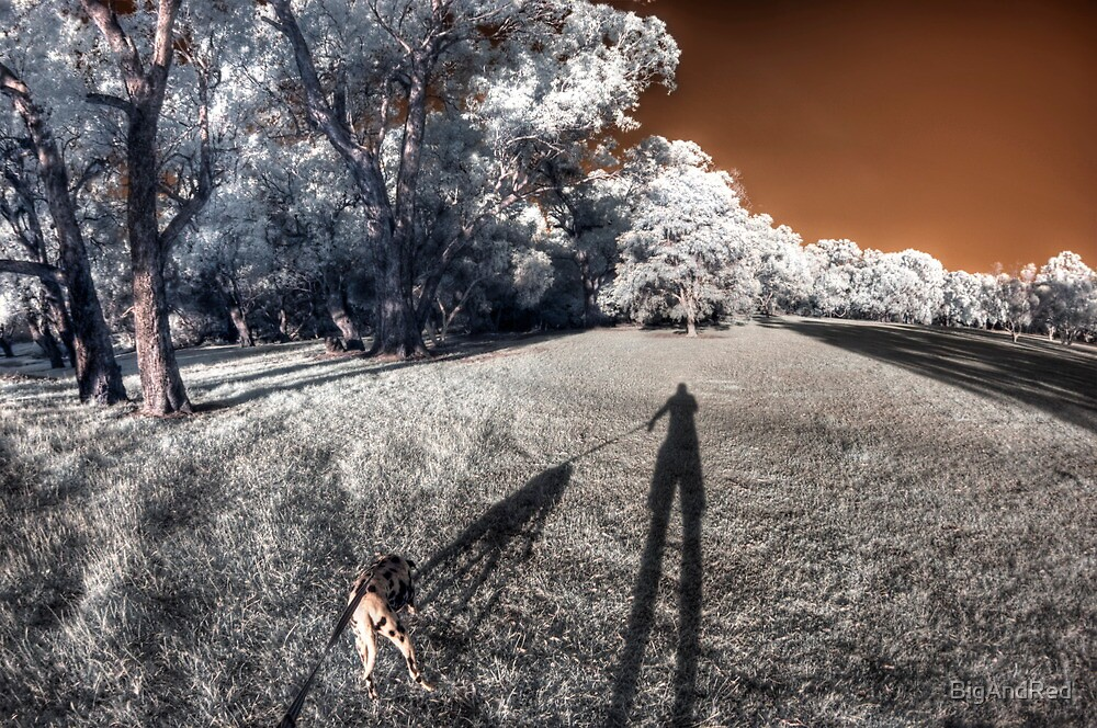 Dog taking me for an evening walk by BigAndRed
