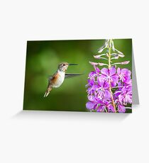 Suspended -- Rufous Hummingbird Greeting Card