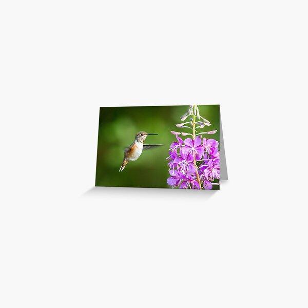 Suspended -- Rufous Hummingbird Greeting Card