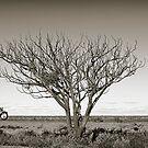 Across the plains by JimFilmer