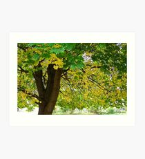 Yellow Autumn Art Print