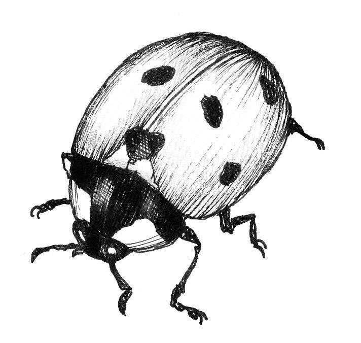 ladybug by Rebekka  Schönefuß