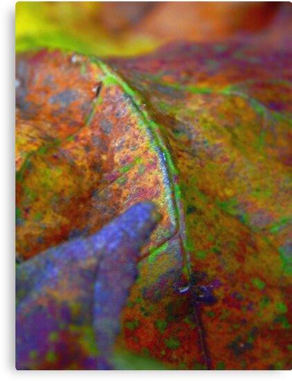 Rainbow Leaf (9305) by sensameleon