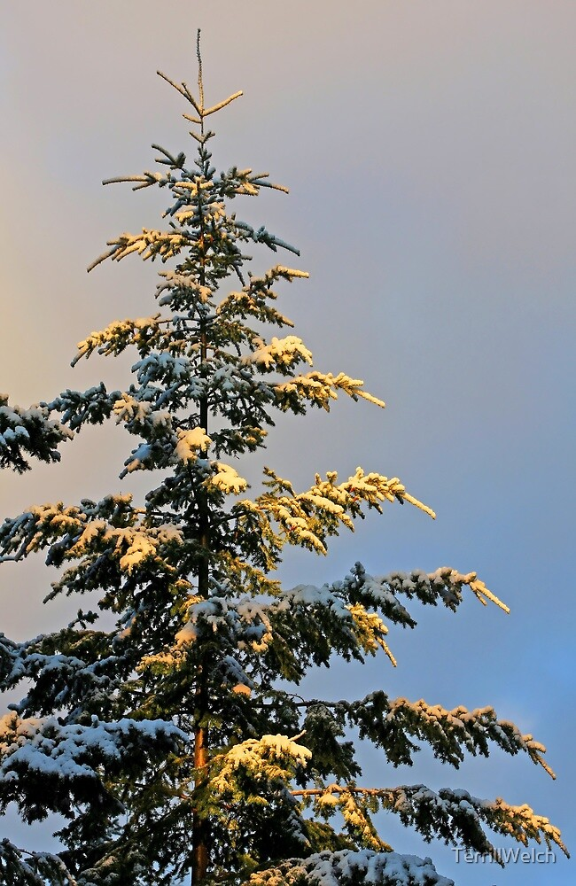 tree in morning with skiff of snow by TerrillWelch