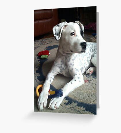 Daisy a little bigger Greeting Card