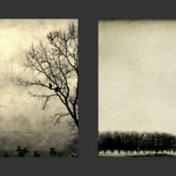 Dream Trees by ajlphotography