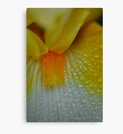 Yellow Flower raindrops abstract 2 Canvas Print