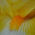 Soft focus flower yellow 1 by Jason Franklin