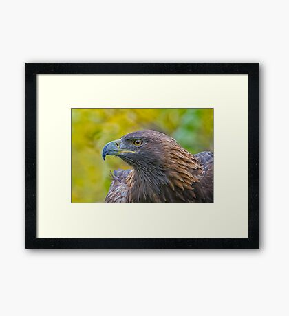 Golden Eagle Profile Framed Print
