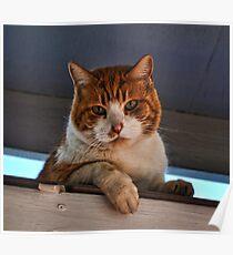 Beware of Cat Poster