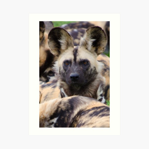 Painted Dog Art Print