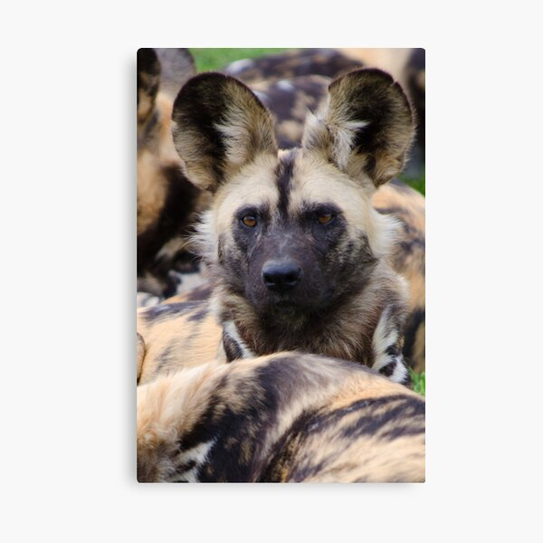 Painted Dog Canvas Print