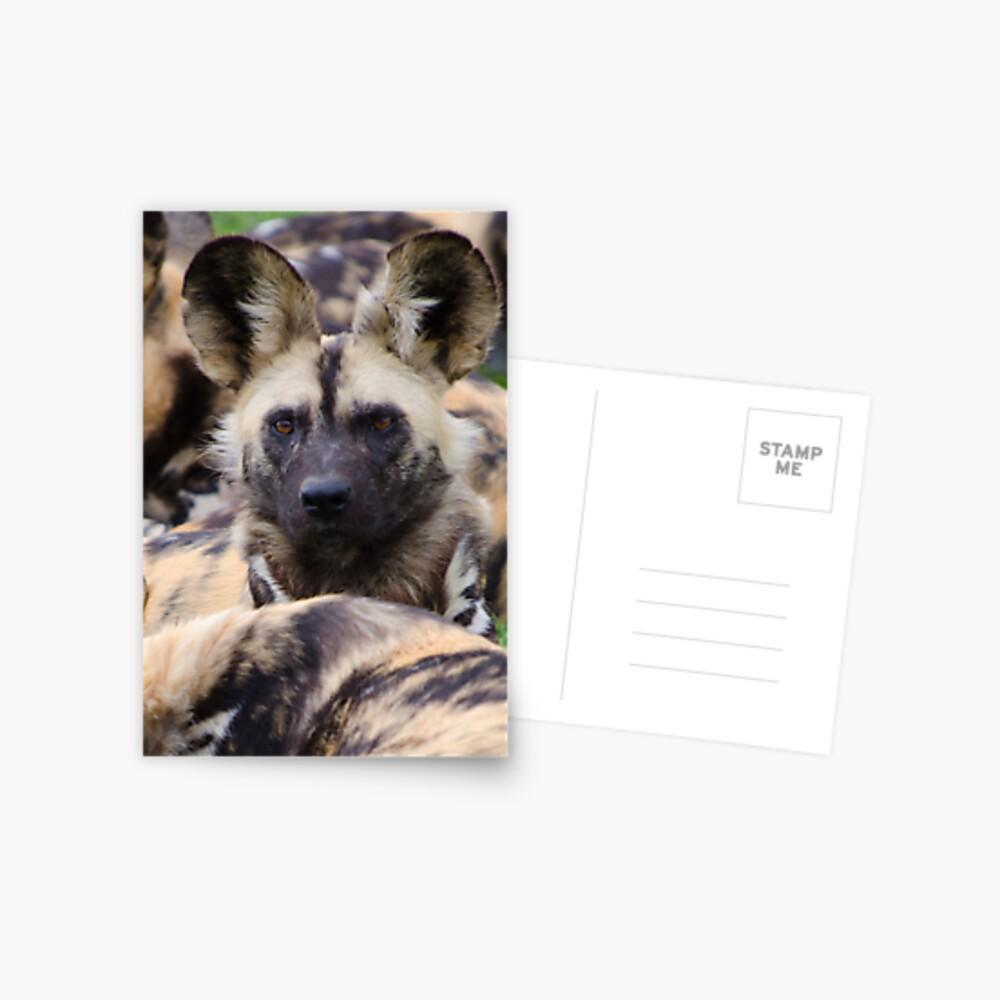 Painted Dog Postcard