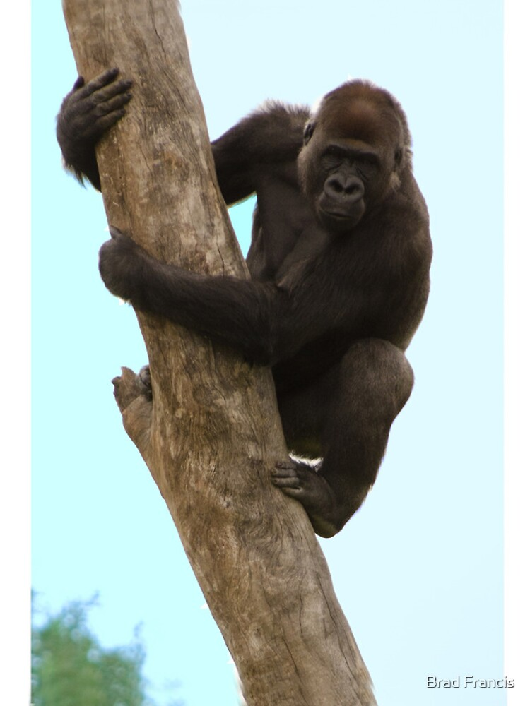 Gorilla iPhone case by bfra