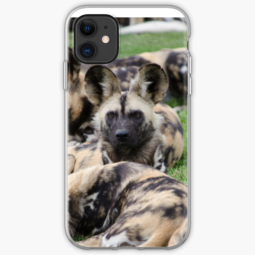 African Painted Dog iPhone case iPhone Case & Cover