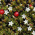 TasmaniART May 2012 by tasadam