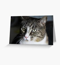 Meet Tiger! Greeting Card