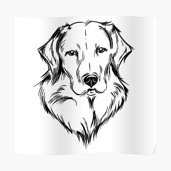 Labrador / Golden Retriever Poster