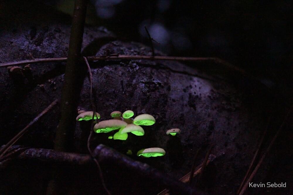 Glowing Mushrooms by Kevin Sebold