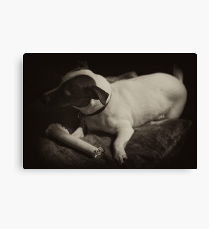 Macey posing dark with bone on pillow 1 Canvas Print