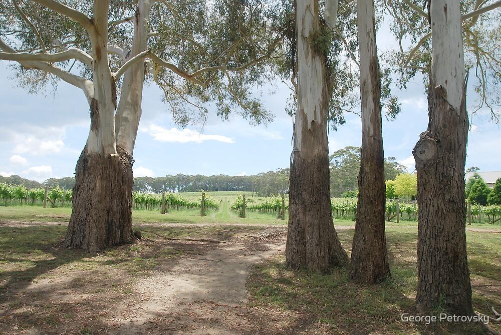 Centennial Winery vineyards by George Petrovsky