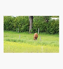 The Grass is Always Greener Photographic Print