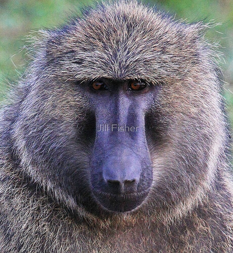 """""""Baboon Face"""" by Jill Fisher 