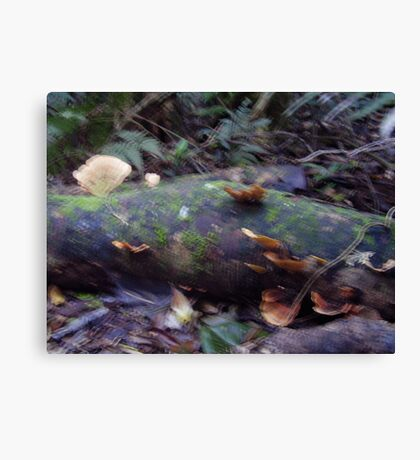 Fungi in the Forest 3 Canvas Print