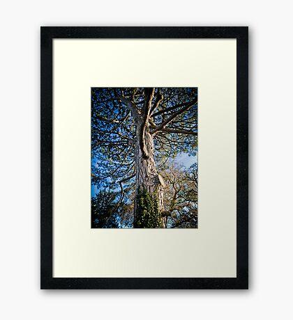 Fairytale Castle Tree Framed Print