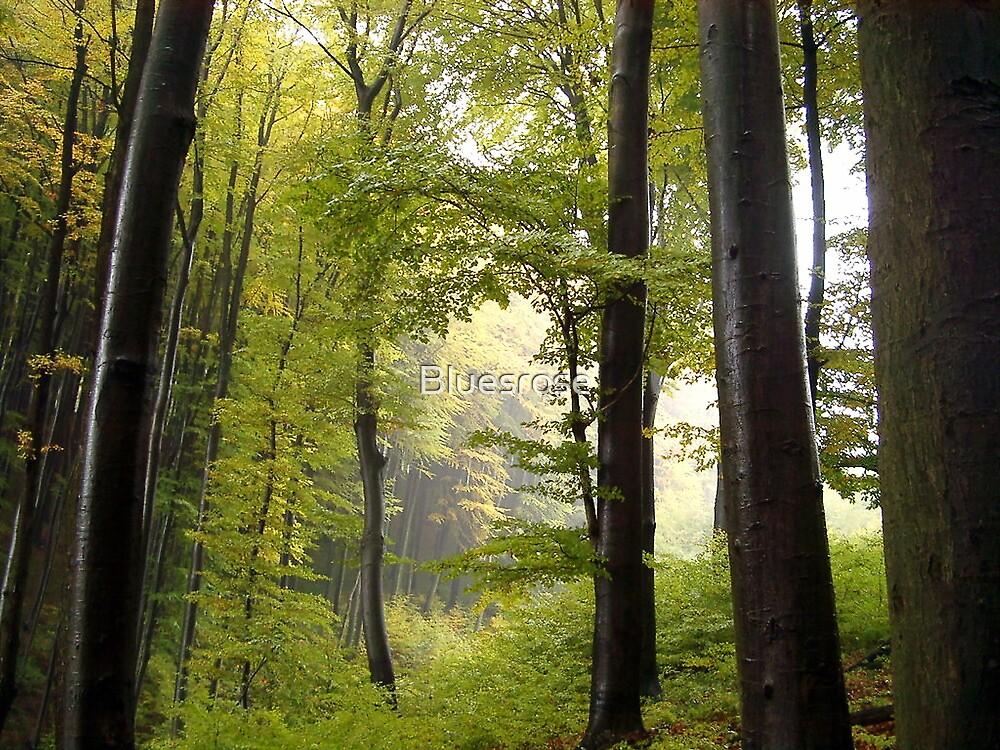 Autumn in Vienna forest by Bluesrose
