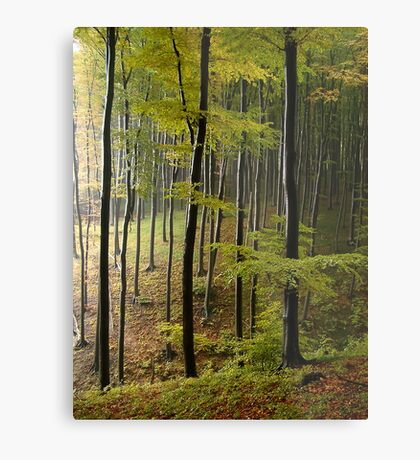 Autumn in Vienna forest. II Metal Print