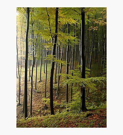 Autumn in Vienna forest. II Photographic Print
