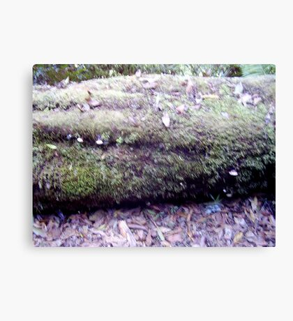 Fungi n Forest Canvas Print