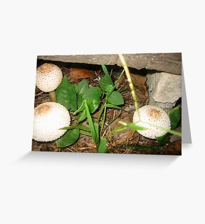 Fungi from my forest Garden Greeting Card