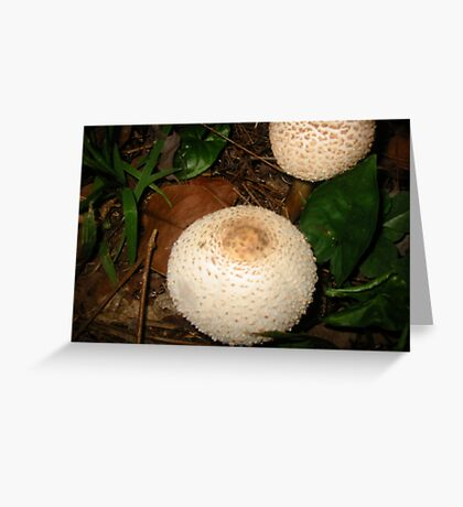 Fungi .... Greeting Card
