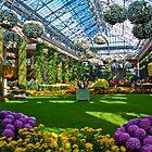 USA. Pennsylvania. Longwood Gardens. Chrysanthemum Festival. by vadim19