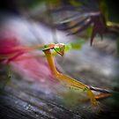 Praying Mantis by Natalie Parker
