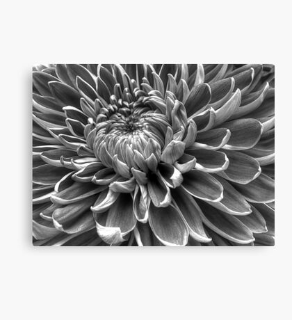 Monotone Macro Mum Bloom Canvas Print