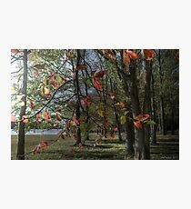Fall Meadow Photographic Print