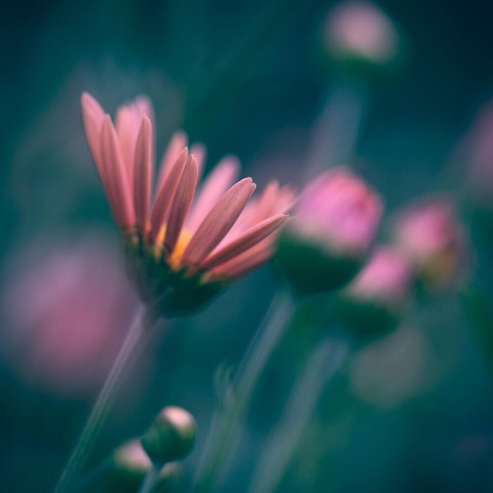 Chrysanthemum by Natalie Parker