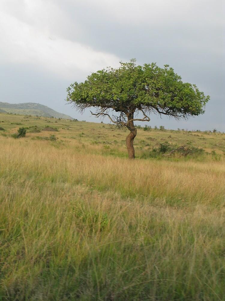 Kenyan Landscape by IslandImages