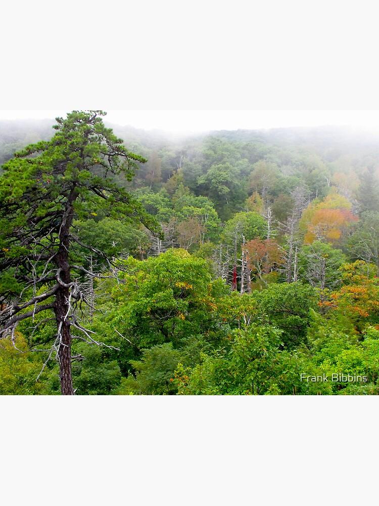 Blue Ridge Autumn 2009 by organicman2