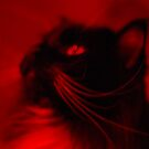 Red Cat by AylaM