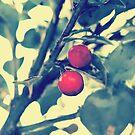 Day 132 - 19th November 2011 by petegrev